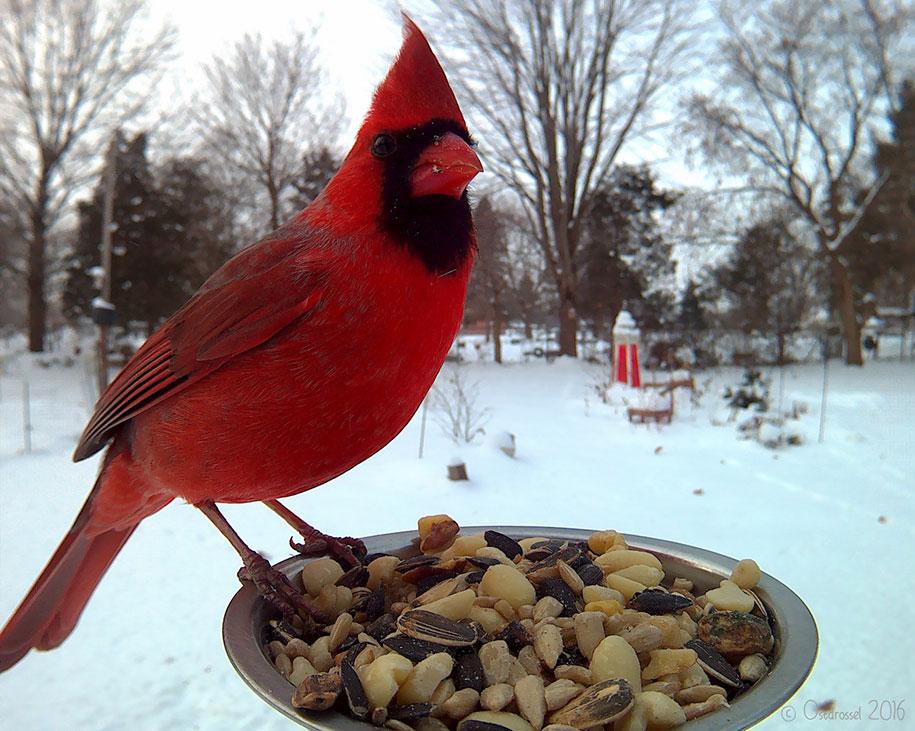 bird-feeder-camera-birds-photos-lisa-ca-9