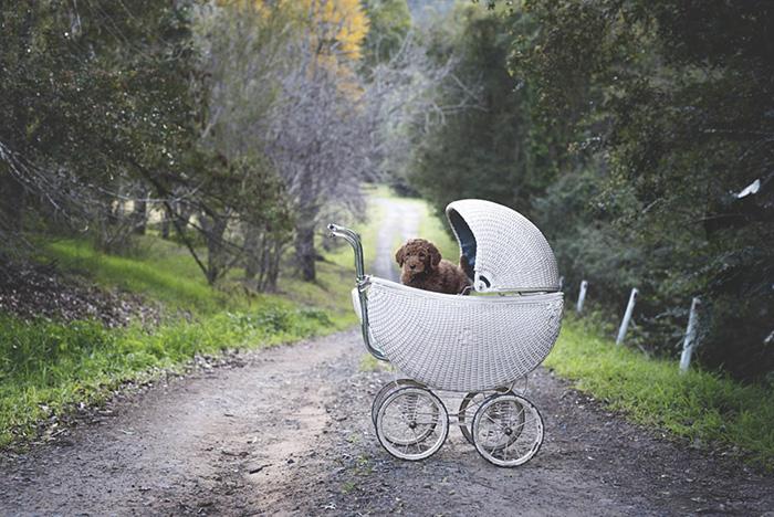 couple-pregnancy-fake-baby-dog-marlboroprincess-4