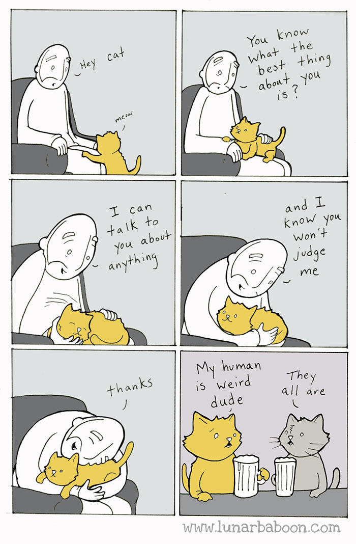 funny-cat-owner-comics-9