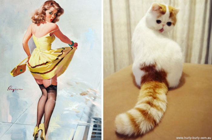 funny-cats-vintage-pin-up-girls-12