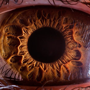 Breathtaking Close-Ups of the Human Eye