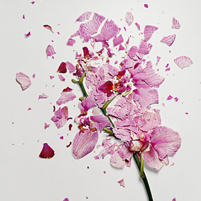 Flowers Soaked in Liquid Nitrogen Shattered Into Pieces