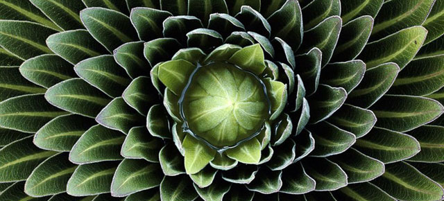 nature patterns pattern natural examples fractals demilked breathtaking geometric geometry textures fractal flower spirals thumb640 plant