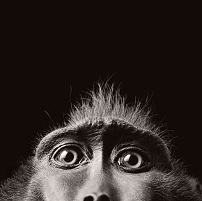 More Than Human: Charismatic Animal Portraits by Tim Flach