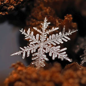 Rediscovering Snowflakes Through Macro Photography