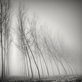 Long Exposure Tree Photography by Pierre Pellegrini