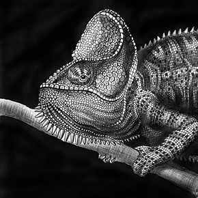 Incredibly Detailed And Realistic Pencil Drawings By Dino