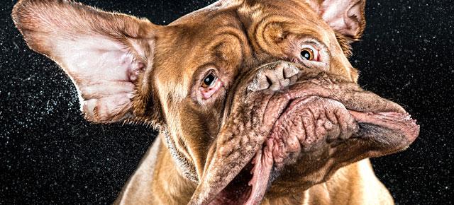 shake-dog-photography-carli-davidson-thu