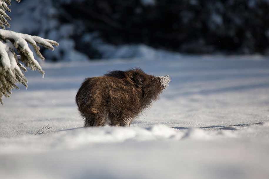 Image Of Wild Animals: 19 Gorgeous Photographs Of Wild Animals During Winter Time