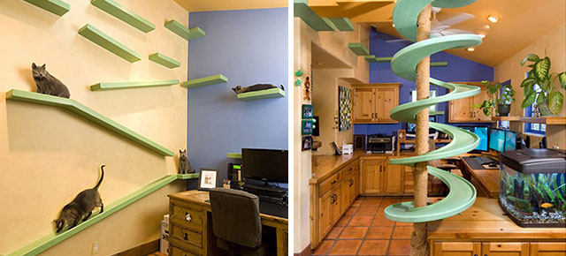 Man Spends $35,000 To Turn His House Into The Playground For His 18 on cat room designs, cat yoga, cat genealogy, cat insurance, cat restaurants, cat garden, cat movies, cat humor, cat tattoo designs, cat style, cat photography, cat health, cat travel, cat fur designs, cat paint, cat remodeling, cat floor plans, cat wall decoration, cat fashion, cat diy,
