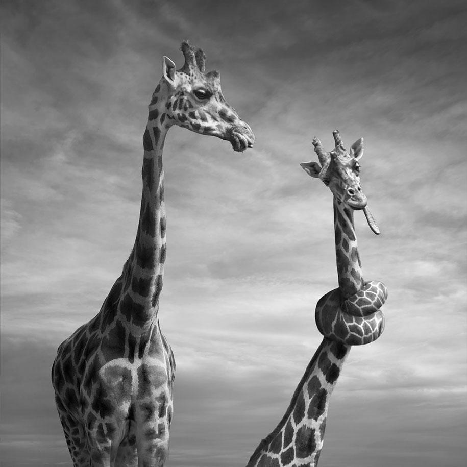 Surreal Photo Manipulation By Photographer Dariusz Klimczak