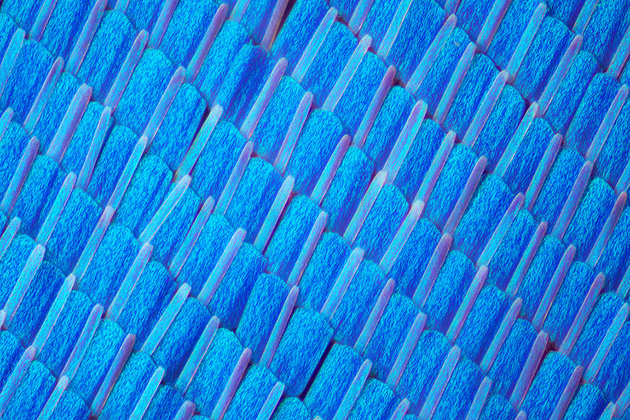 Macro Photographs Of Butterfly And Moth Wings By Linden