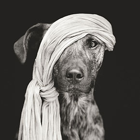 Delightfully Expressive Portraits Of Dogs By Elke Vogelsang