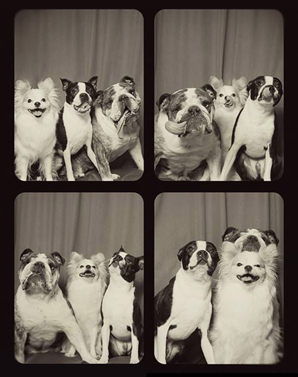 This Is What Happens When You Put Dogs In A Photo Booth