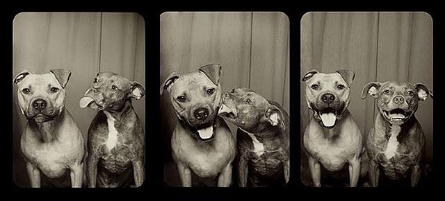 Simple Pitbull Anime Adorable Dog - pit-bulls-photo-booth-cute-dogs-lynn-terry-thumb640  Trends_642917  .jpg
