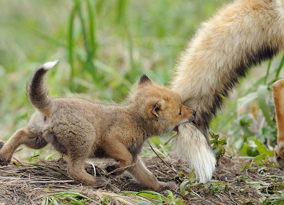 Image result for beautiful wildlife pictures