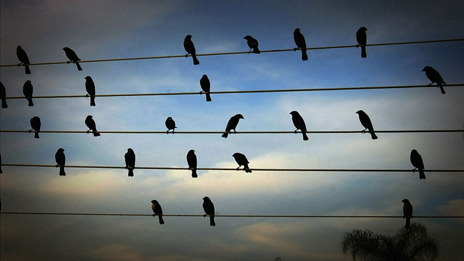 Birds\' Positions On Electric Wires Turned Into Enchanting Music
