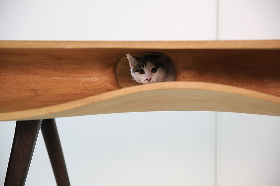 Cat Coffee Table catable: shared table lets cats have all the fun while their