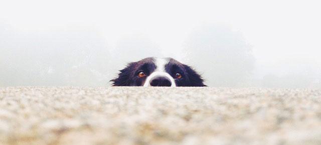 Image result for dog hiding