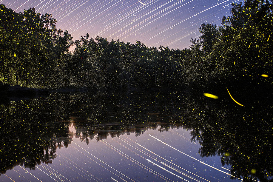 Magical Long-Exposure Firefly Pictures By Vincent Brady