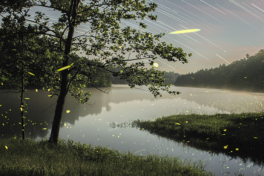 Magical Long Exposure Firefly Pictures By Vincent Brady