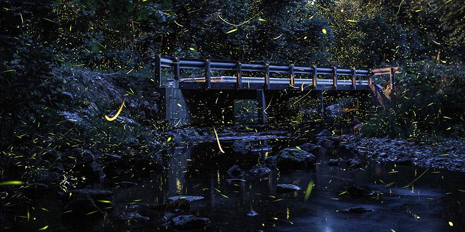 firefly wallpaper