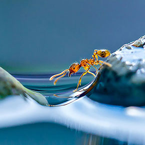 The Innocent And Charming Macro World Captured By Japanese Photographer Miki Asai