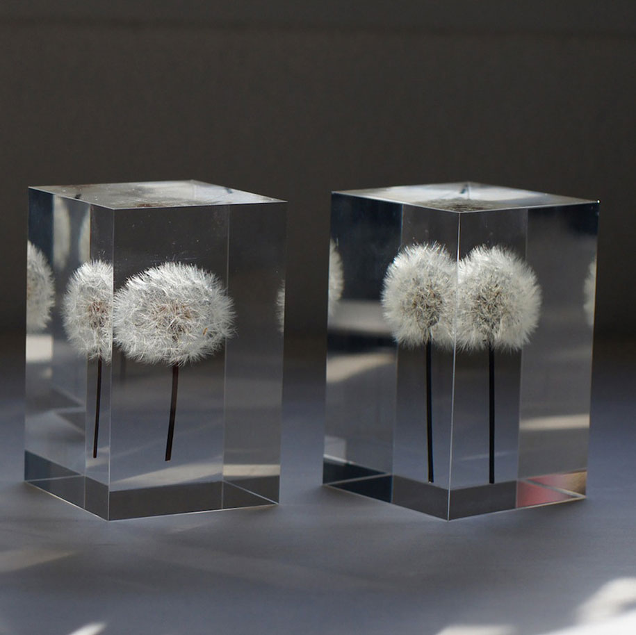 artist profile delicate lights made of real dandelions by takao inoue team yellow. Black Bedroom Furniture Sets. Home Design Ideas