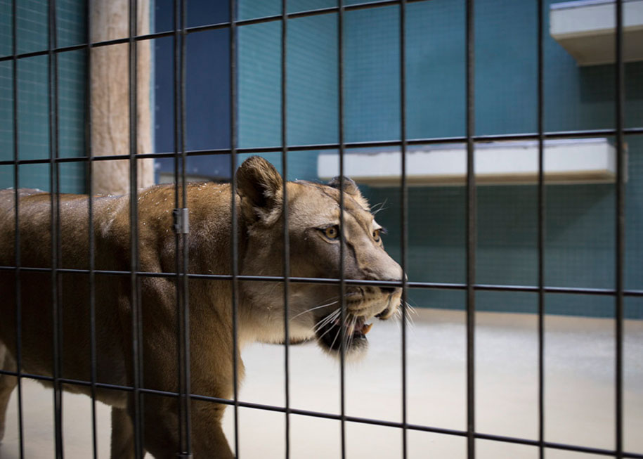 These Heartbreaking Photos Of Zoo Animals Are A Plea For ...