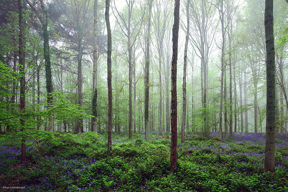 bluebell-forest-hallerbos-belgium-nature-photography-11