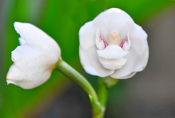 flowers-look-like-something-else-orchids-pareidolia-10