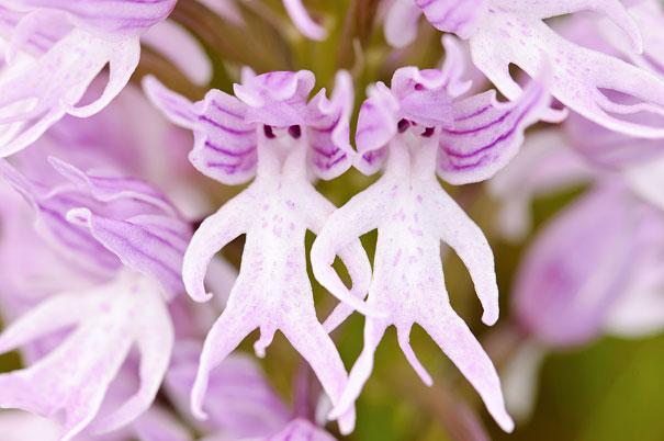 flowers-look-like-something-else-orchids-pareidolia-15
