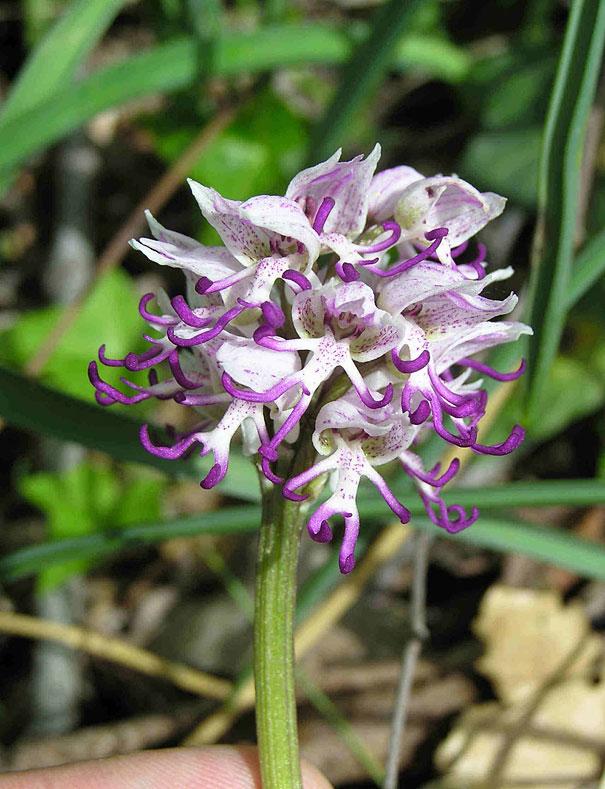 flowers-look-like-something-else-orchids-pareidolia-16