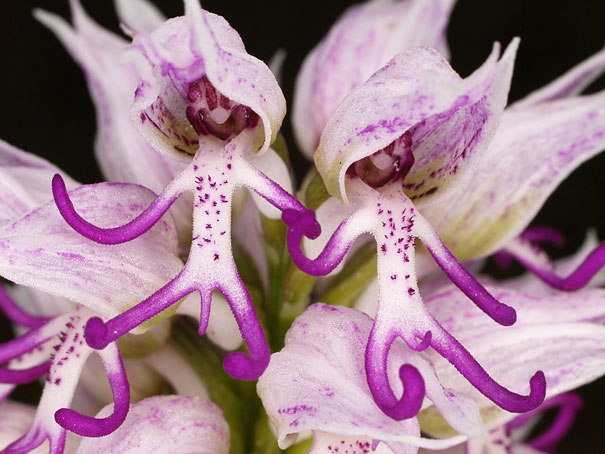 flowers-look-like-something-else-orchids-pareidolia-17