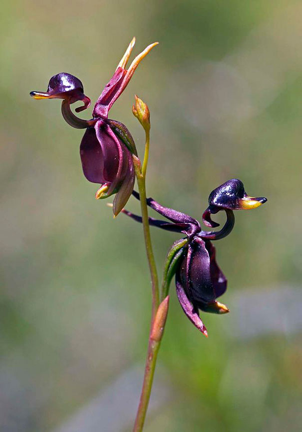 flowers-look-like-something-else-orchids-pareidolia-24