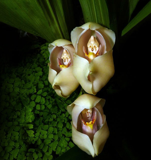 flowers-look-like-something-else-orchids-pareidolia-3