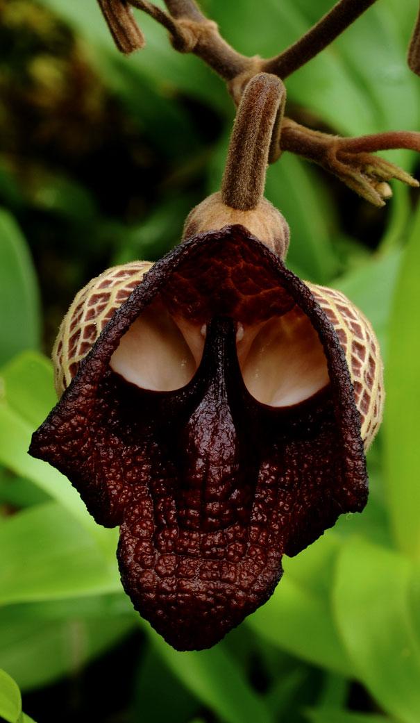 flowers-look-like-something-else-orchids-pareidolia-32