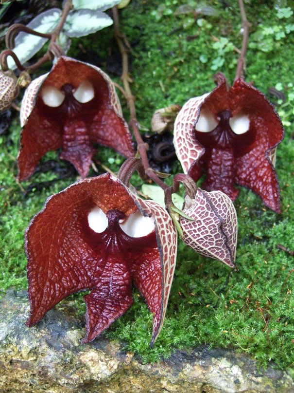 flowers-look-like-something-else-orchids-pareidolia-33