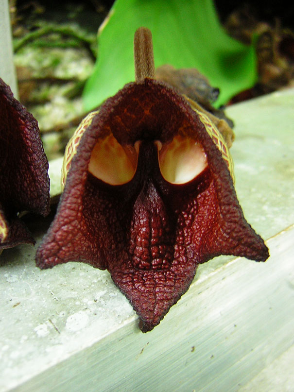 flowers-look-like-something-else-orchids-pareidolia-34
