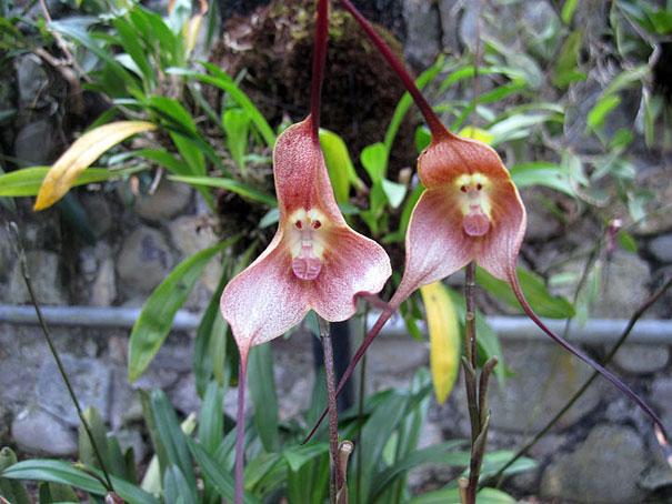 flowers-look-like-something-else-orchids-pareidolia-5