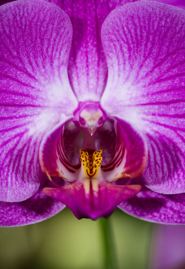 flowers-look-like-something-else-orchids-pareidolia-9