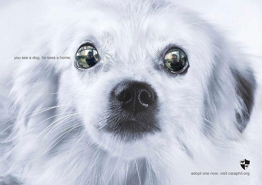 social-awareness-powerful-animal-ads-30