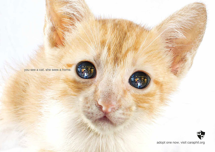 social-awareness-powerful-animal-ads-31