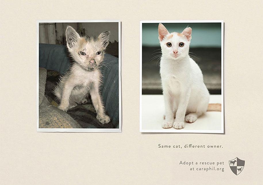 social-awareness-powerful-animal-ads-37