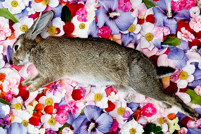 natura-morte-honoring-dead-animals-marina-ionowa-gribina-1