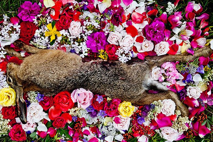 natura-morte-honoring-dead-animals-marina-ionowa-gribina-5