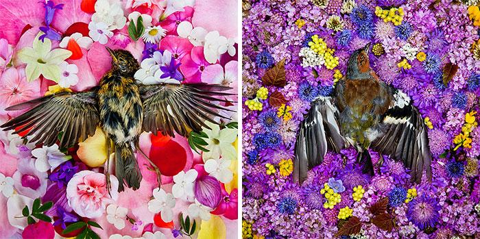 natura-morte-honoring-dead-animals-marina-ionowa-gribina-8