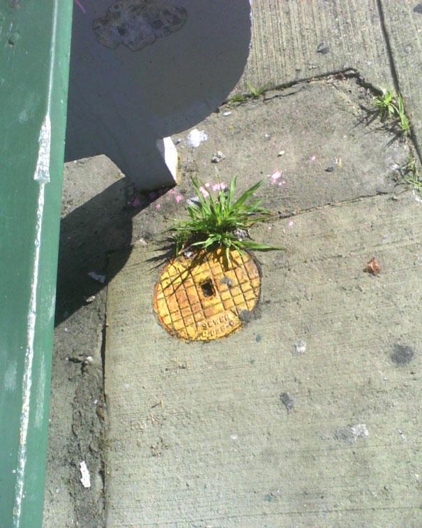 street-art-interacting-with-nature-surroundings-45