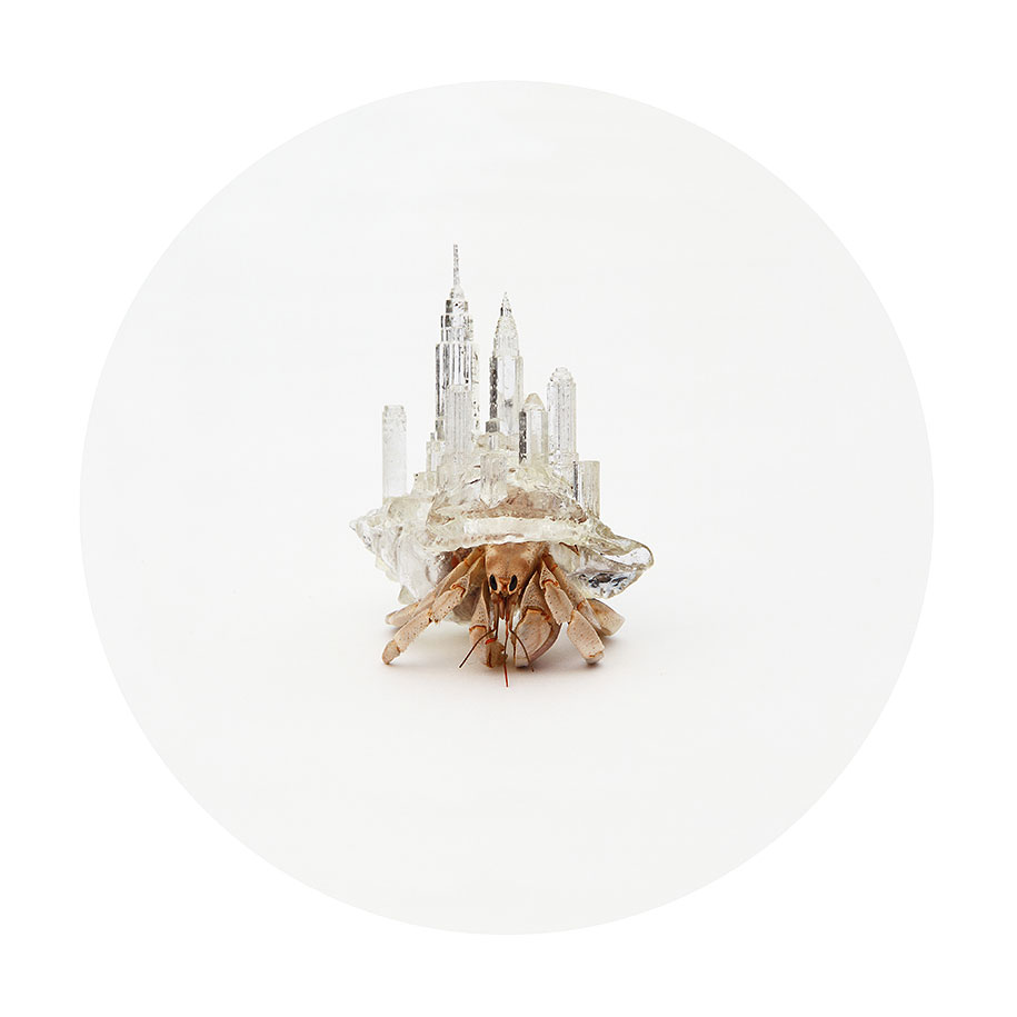 3d-printed-hermit-crab-shells-aki-inomata-4