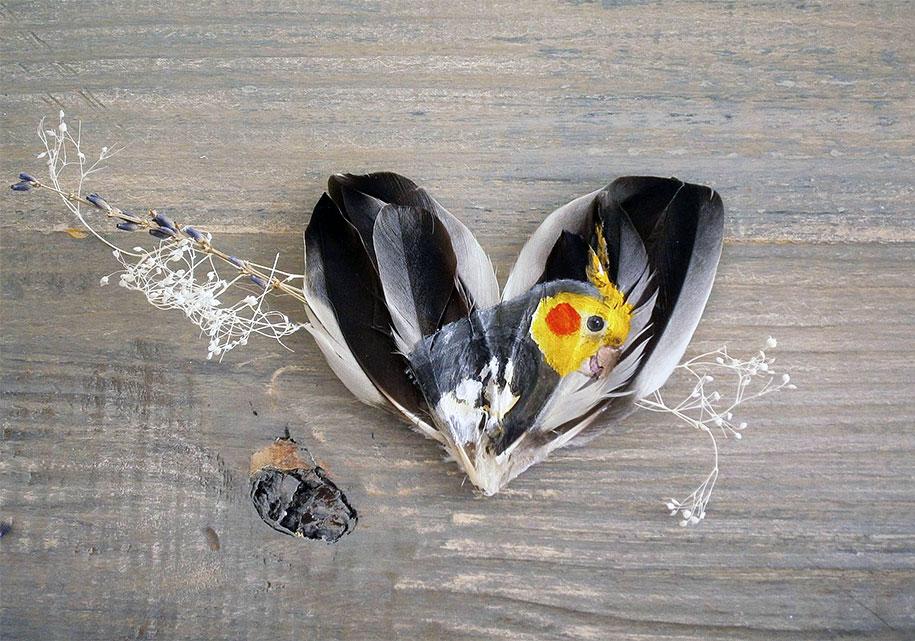 animal-bird-painting-feathers-oil-acrylic-paint-jamie-homeister-16